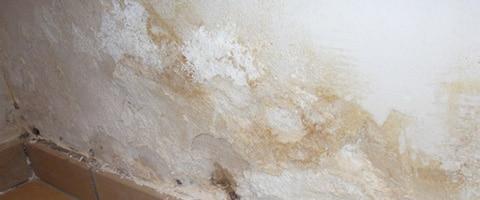 Salpeter verwijderen bij vochtige muren - Online advies