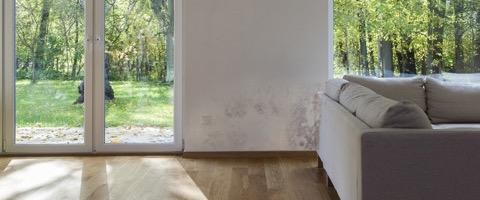 soorten schimmel in huis