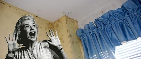 vochtproblemen natte muren