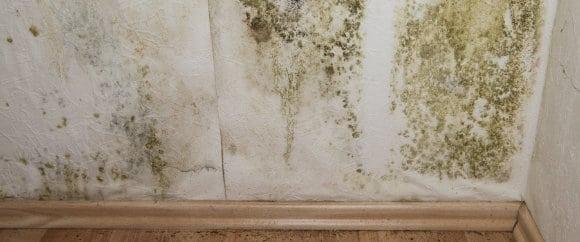 schimmel op muur: oorzaken en hoe schimmels verwijderen & voorkomen, Deco ideeën