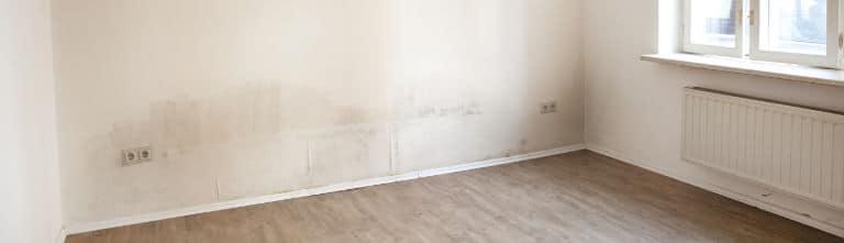 zwarte schimmel muur